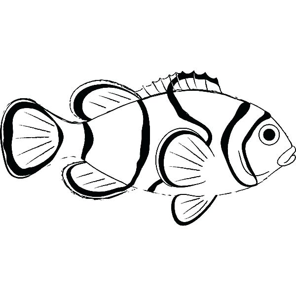 600x612 Realistic Fish Coloring Pages Sea Animal Clown Fish Coloring Pages