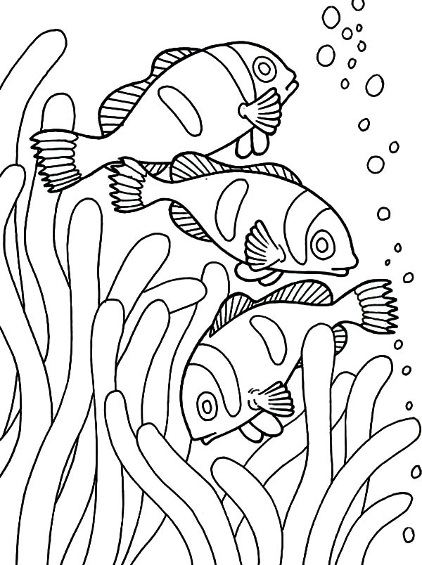 600x804 School Of Clown Fish Coloring Pages School Of Clown Fish Coloring