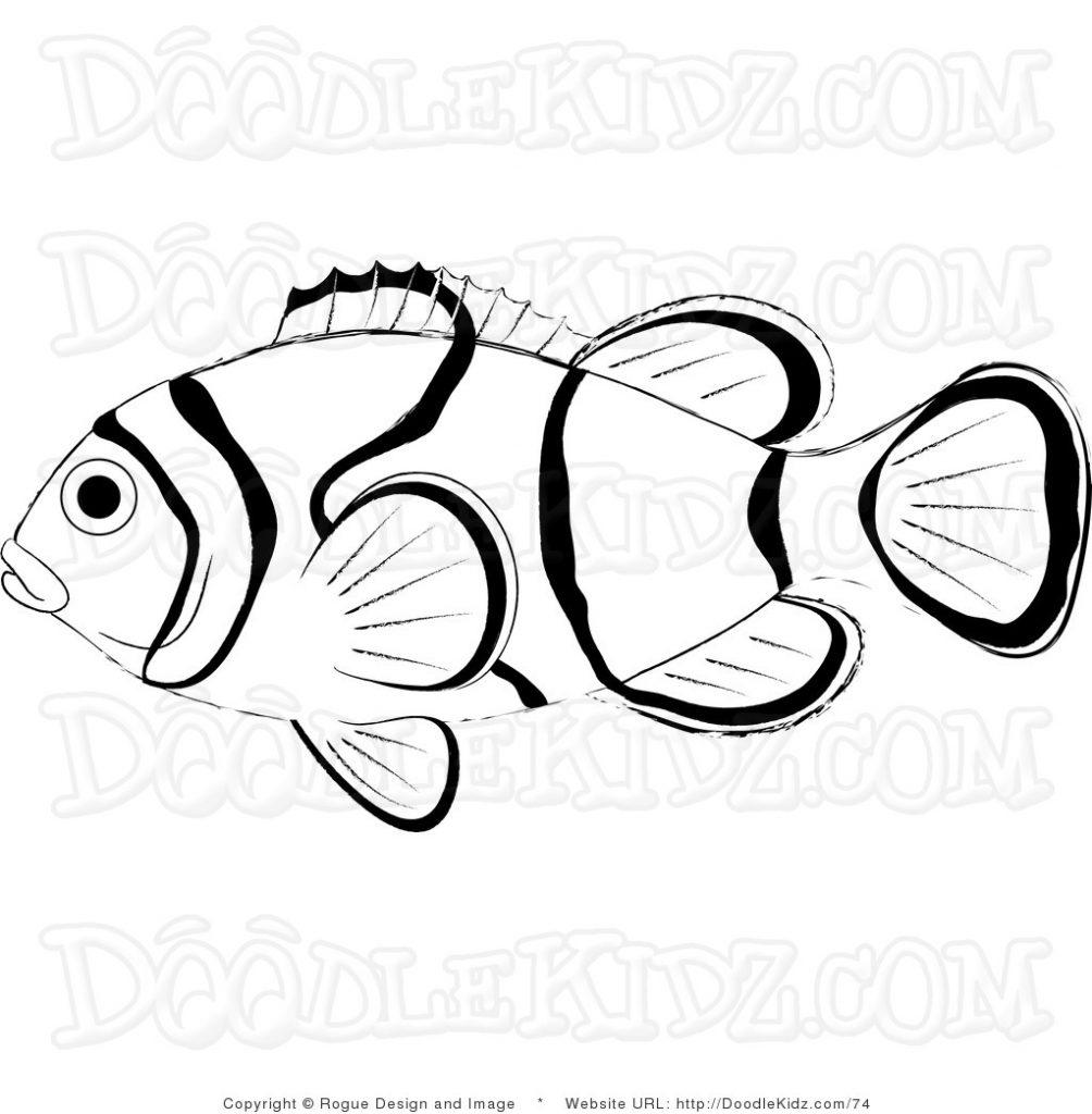 Clownfish Drawing at GetDrawings