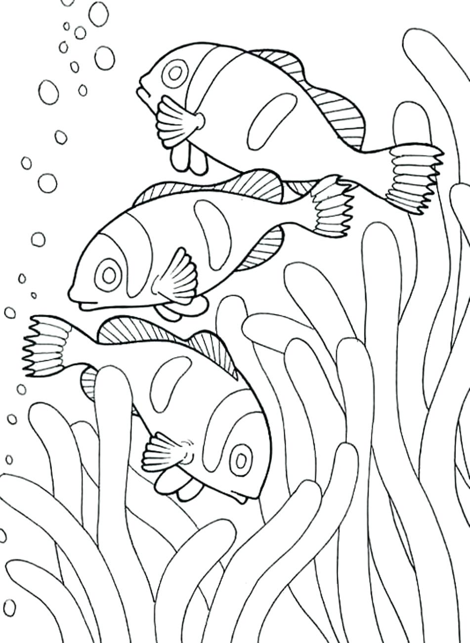 Clownfish Drawing at GetDrawings.com | Free for personal use ...