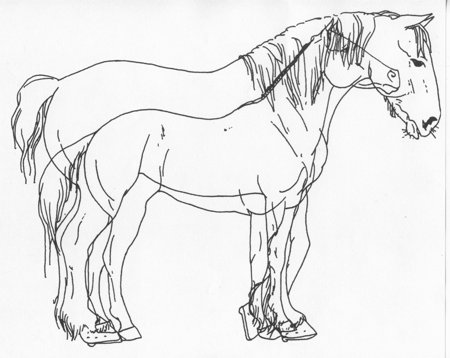 1546x1230 Horse And Draft Comparison By Stonegate