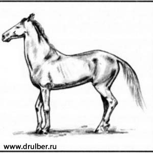 300x300 How To Draw The Horse Of Clydesdale Breed With A Pencil Step By Step