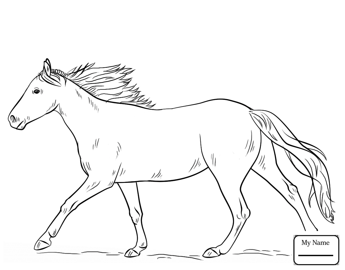 Clydesdale Horse Drawing at GetDrawings