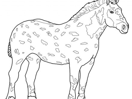 440x330 Clydesdale Coloring Pages 1221