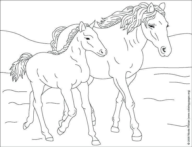 736x566 Coloring Horse Baby Horse Coloring Pages Horse Coloring Picture 1