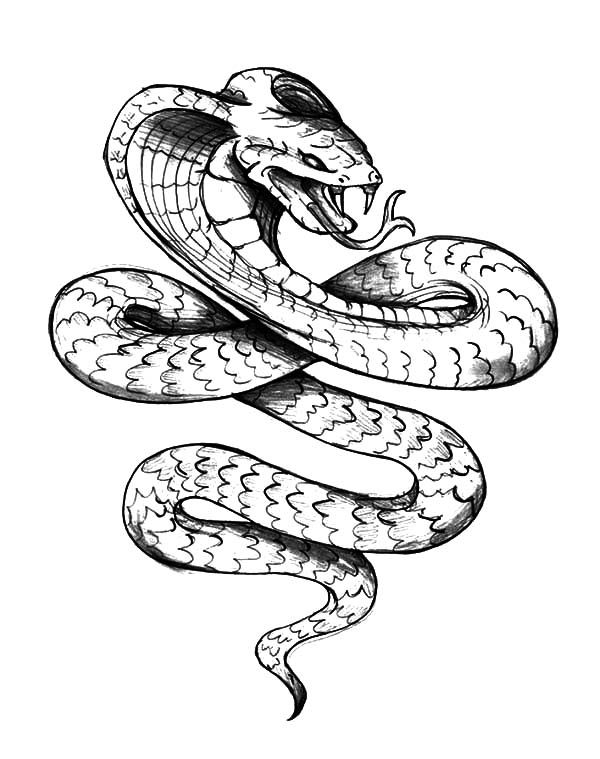 600x759 King Cobra, King Cobra Tattoo Coloring Pages Animals
