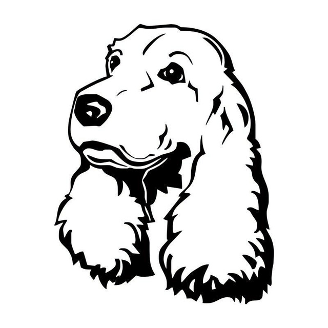 Cocker Spaniel Drawing