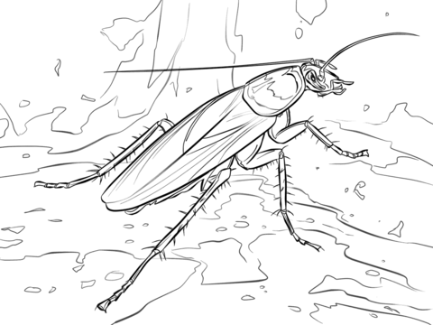 Cockroach Drawing
