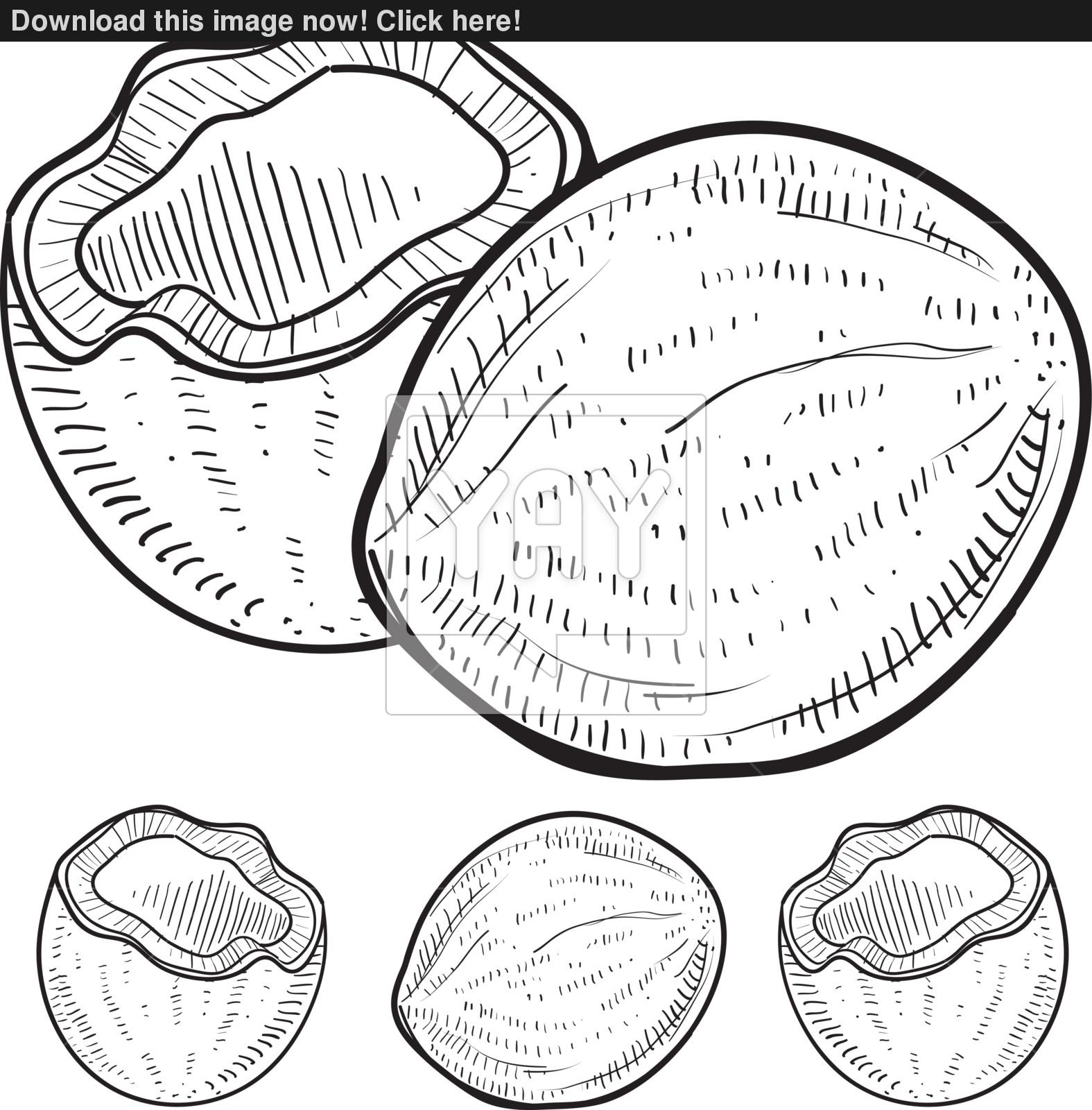 1575x1600 Coconut Sketch Vector