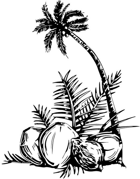 468x600 Coconut Tree Free Vector In Adobe Illustrator Ai ( Ai ) Vector