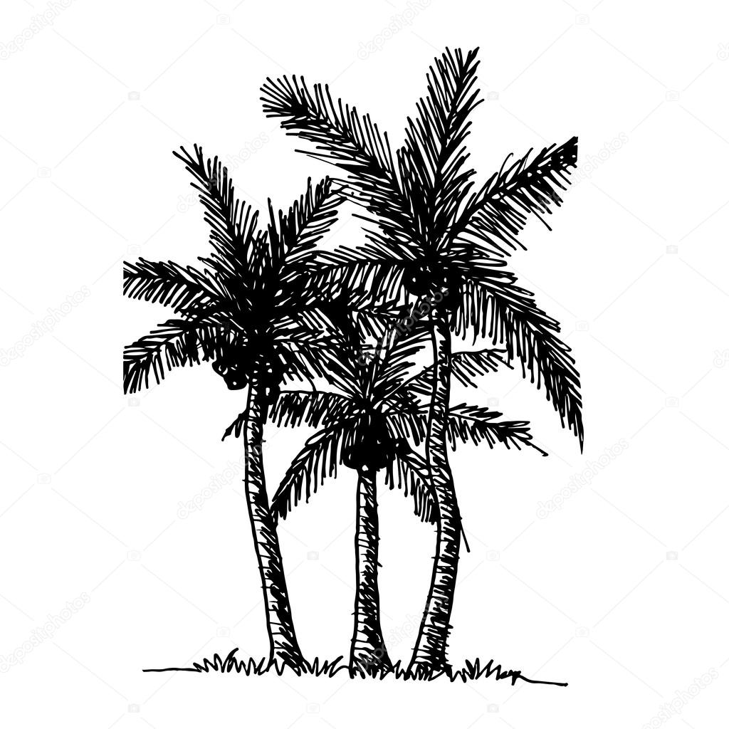 1024x1024 Doodle Coconut Tree Icon Stock Vector Porjai