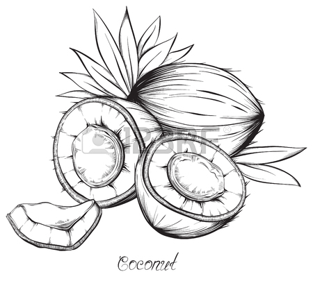 450x405 Coconut Water Drink, Green Coconut Vector. Hand Drawn Sketch