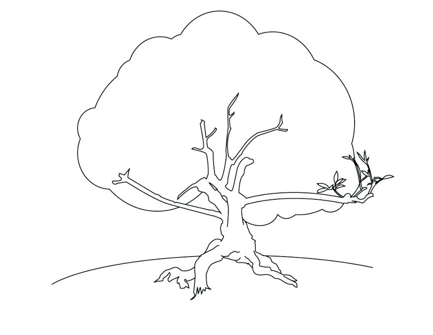 878x679 Coconut Tree Coloring Page Coloring Free Tree For Coloring