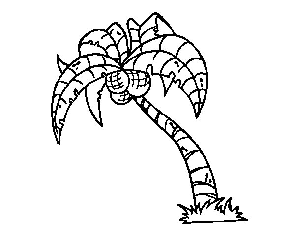 600x470 Coconut Palm Tree Coloring Page