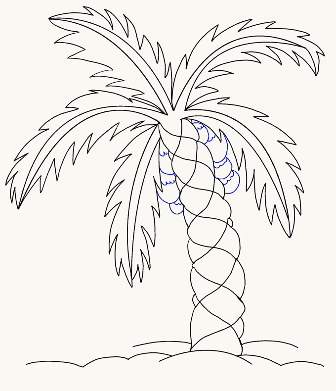 680x790 How To Draw A Palm Tree Easy Drawing Guides