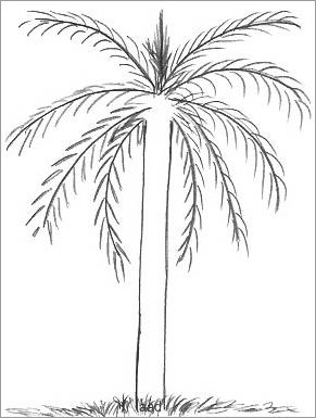 291x385 Palm Tree Drawings