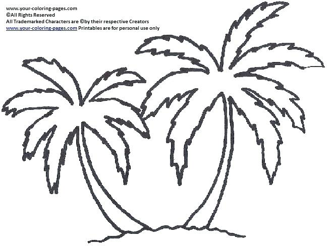 Coconut Palm Tree Drawing At Getdrawings Com Free For Personal Use