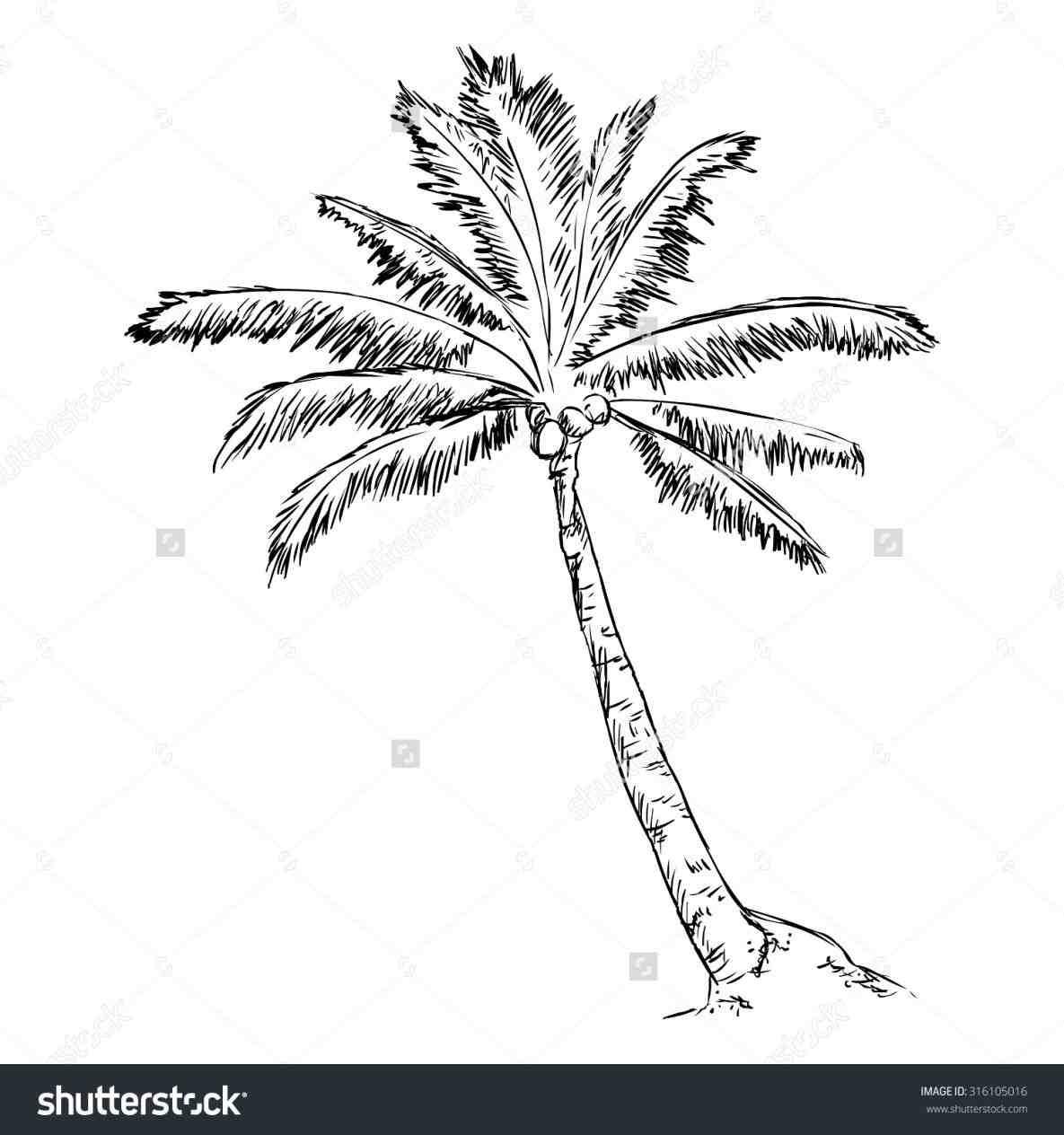 1185x1264 Palm Tree Drawing