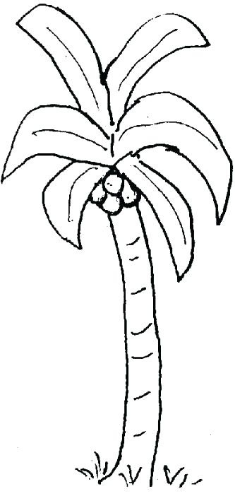 333x702 Palm Trees Coloring Pages