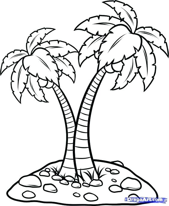 564x688 Coconut Palm Tree Coloring Page Pages Free