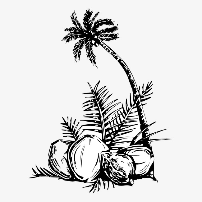 650x650 Coconut And Coconut Trees, Coconut Tree, Coconut, Hand Painted