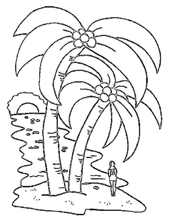 Coconut Tree Pictures Drawing