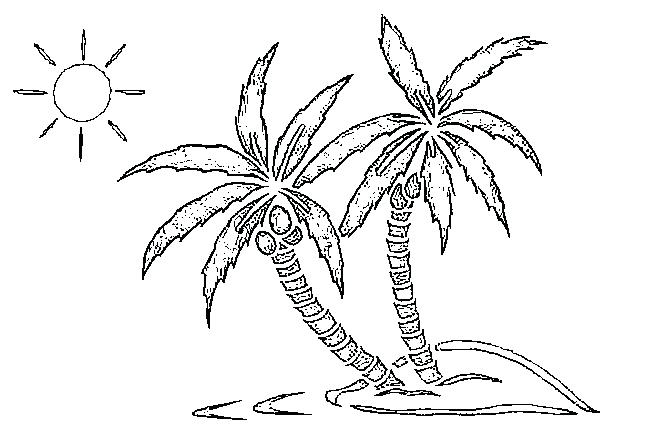 Coconut Trees Drawing