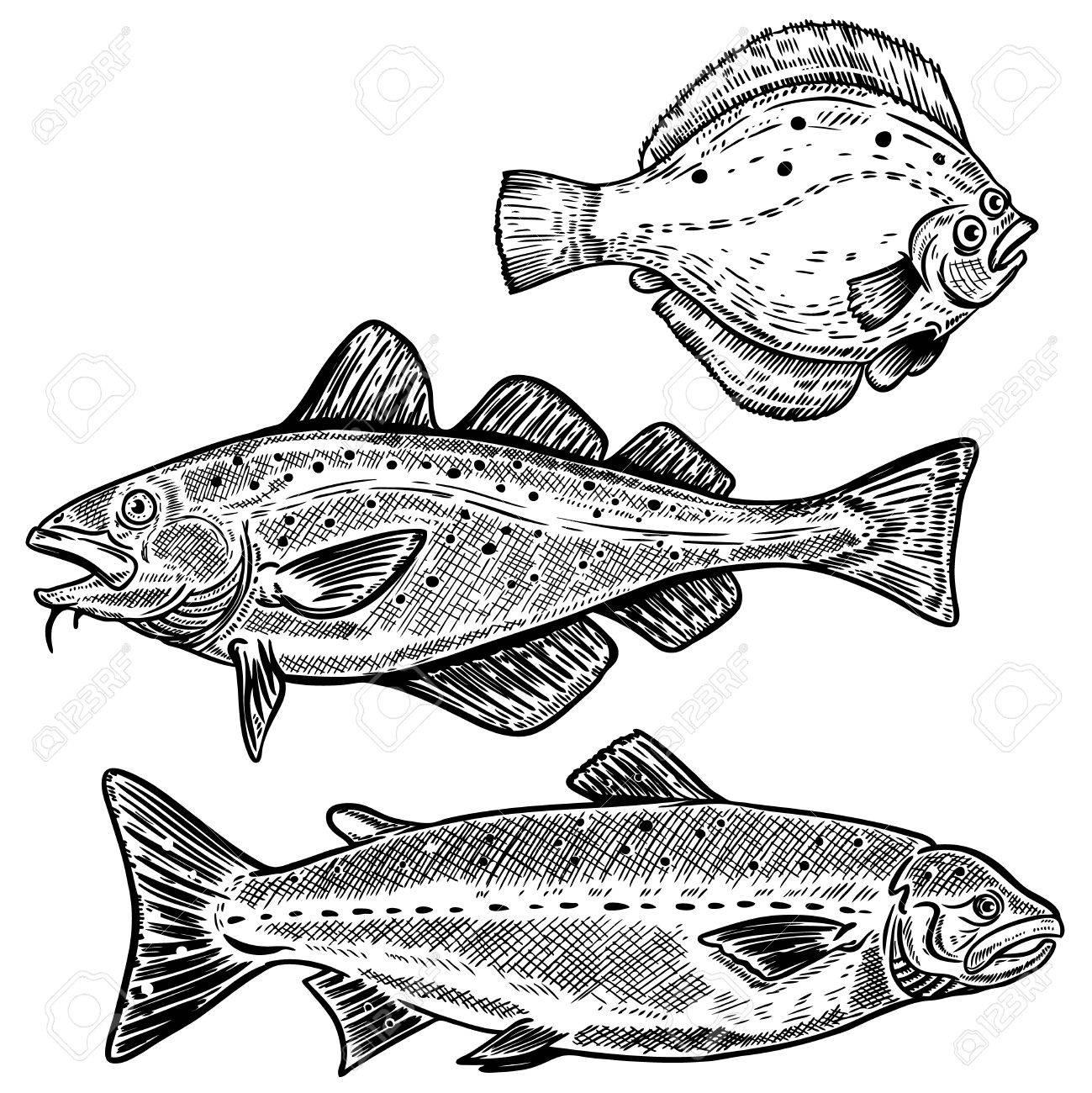 1299x1300 Cod, Salmon, Flounder Fish Illustrations Isolated On White