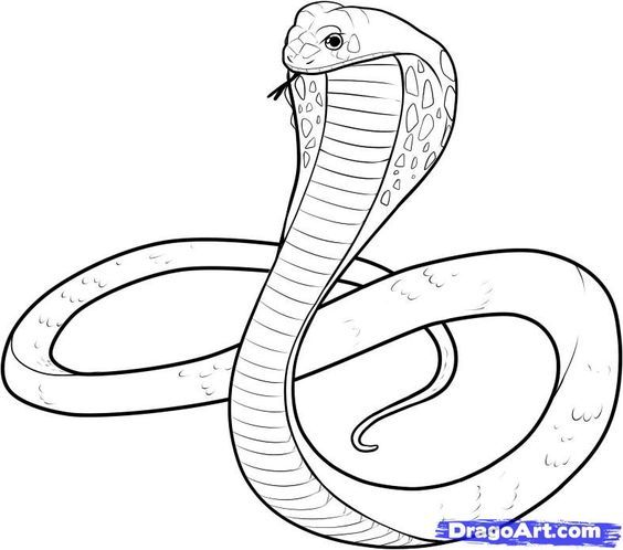 Coiled Snake Drawing