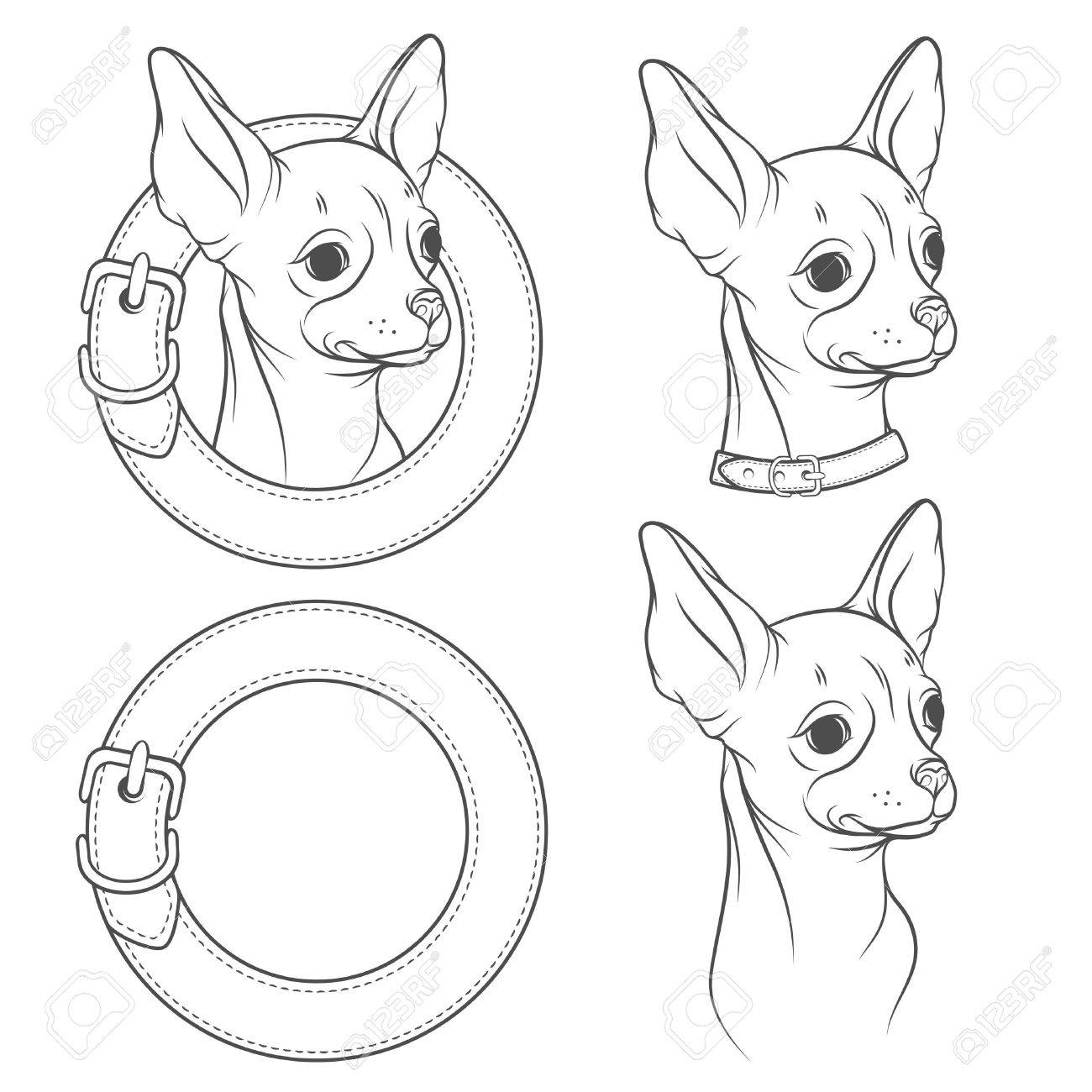 1300x1300 A Set Of Vector Drawing Of The Chihuahua In The Collar. Vector