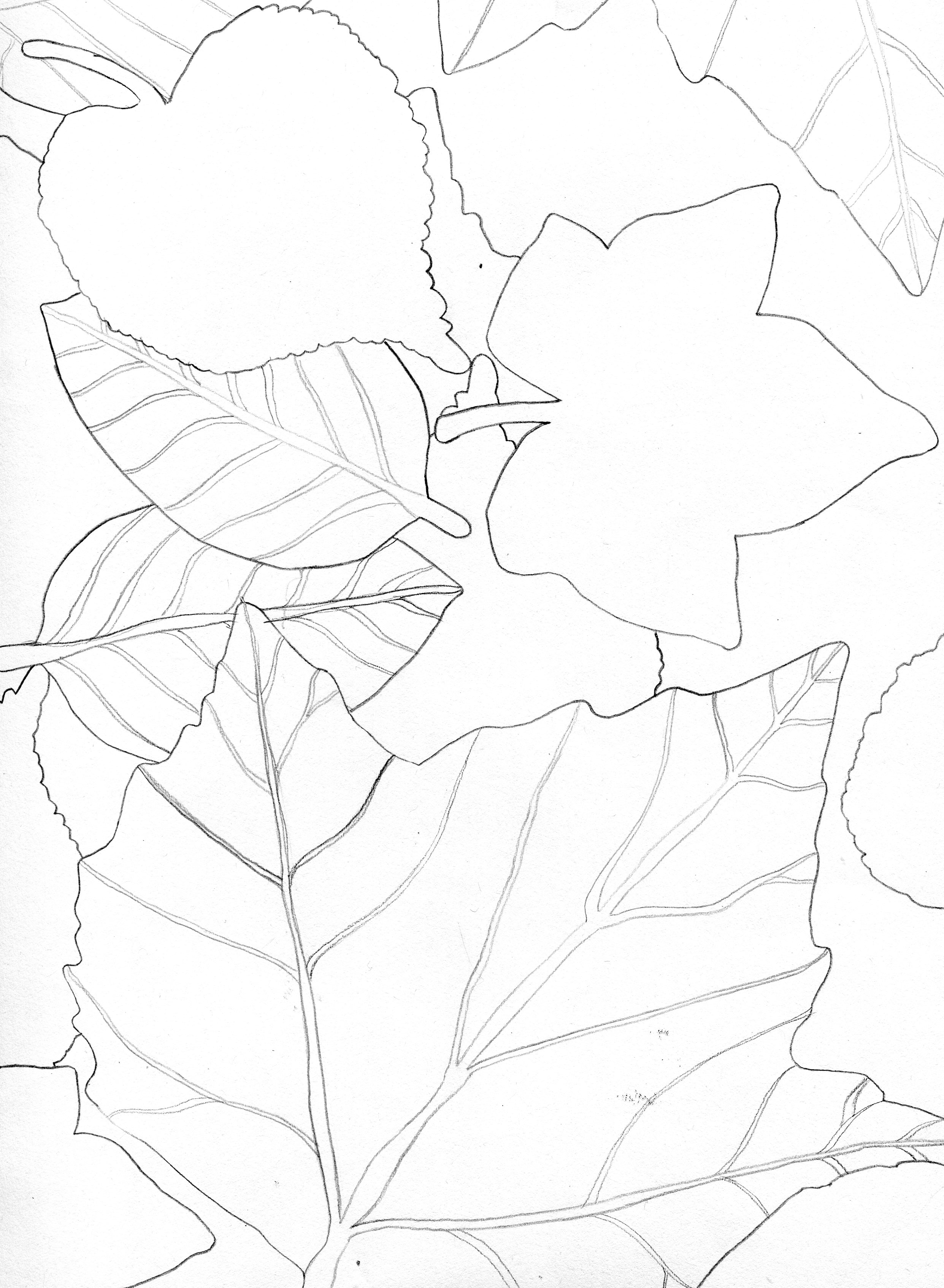 2483x3389 College Fine Art Class) Line Drawing Of Leaves Drawing