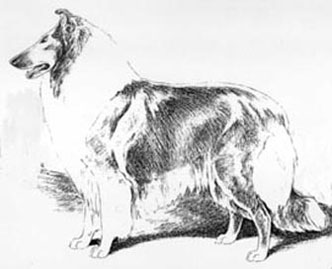332x269 Collie Illustrations