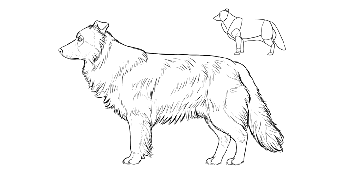 700x357 How To Draw A Dog Details Make The Difference