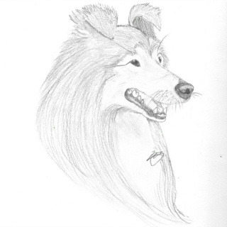 320x320 Repost Of My Colliesheltie Drawing Made Possible By A Tutorial