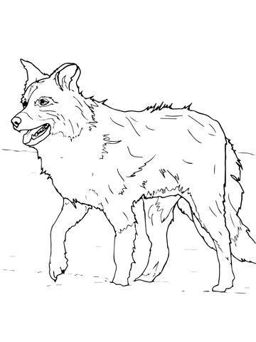 360x480 Scotch Sheep Dog Or Border Collie Coloring Page Free Printable