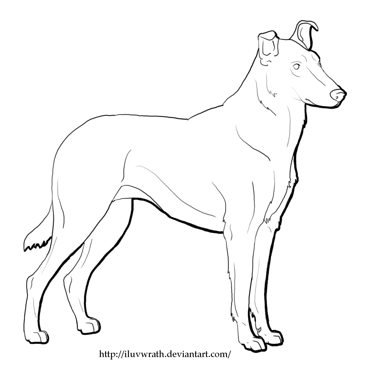1200x1200 Smooth Collie