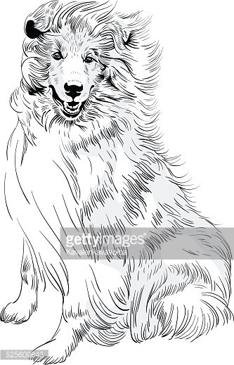 333x519 Vector Sketch Dog Rough Collie Breed Hand Drawing Vector Premium