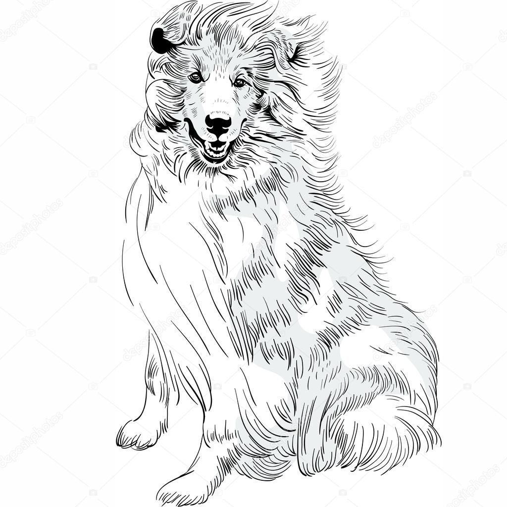 1024x1024 Vector Sketch Dog Rough Collie Breed Hand Drawing Vector Stock