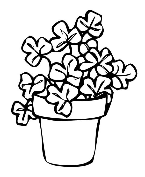 600x734 Rare Four Leaf Clover On Common Three Leaf Clovers Coloring Page