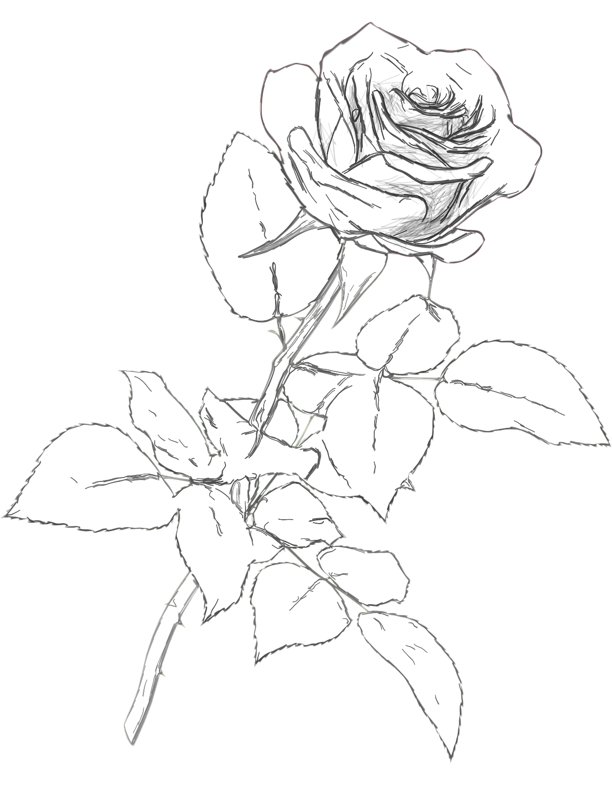 1246x1600 Classic Rose Charcoal Drawing Pencil Color Png Clipart Picture
