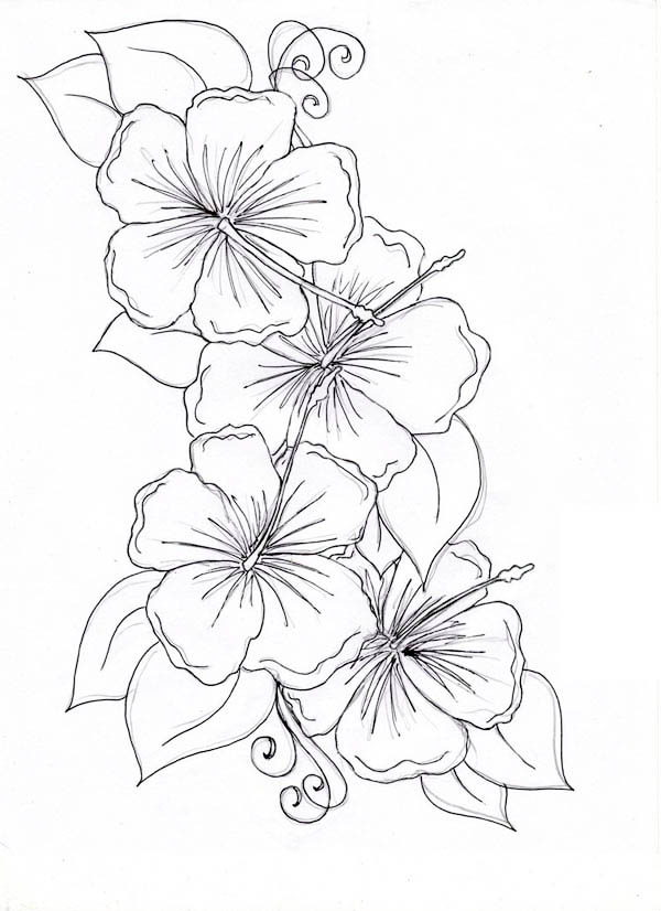 600x826 Hibiscus Flower Drawing Coloring Page Color Luna