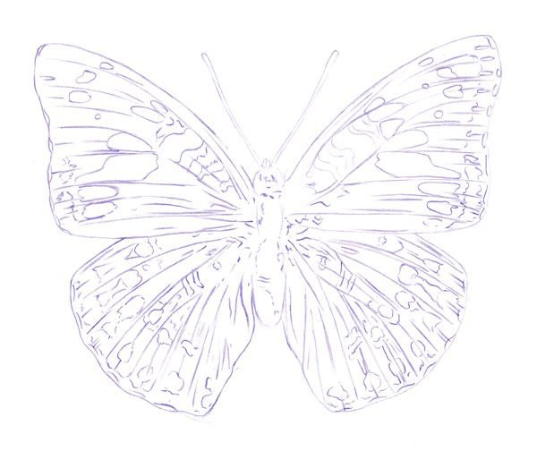 600x504 How To Draw A Butterfly