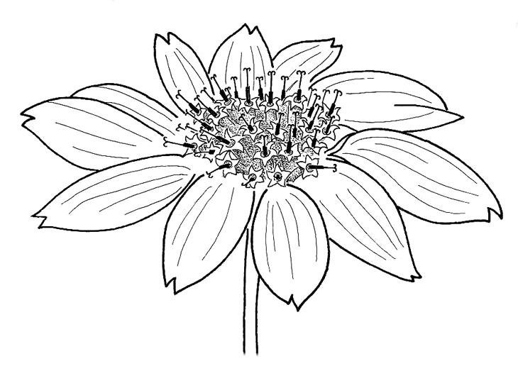730x516 Flower Drawings With Color For Kids Tumblr In Black And White