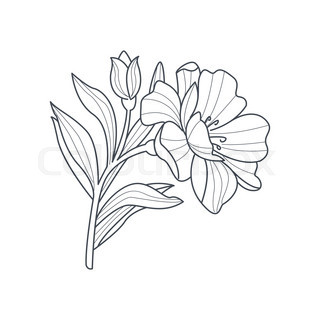 320x320 Jasmine Flower Monochrome Drawing For Coloring Book Hand Drawn