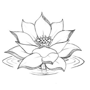 300x300 Lotus Flower Growing Coloring Page Kids Play Color