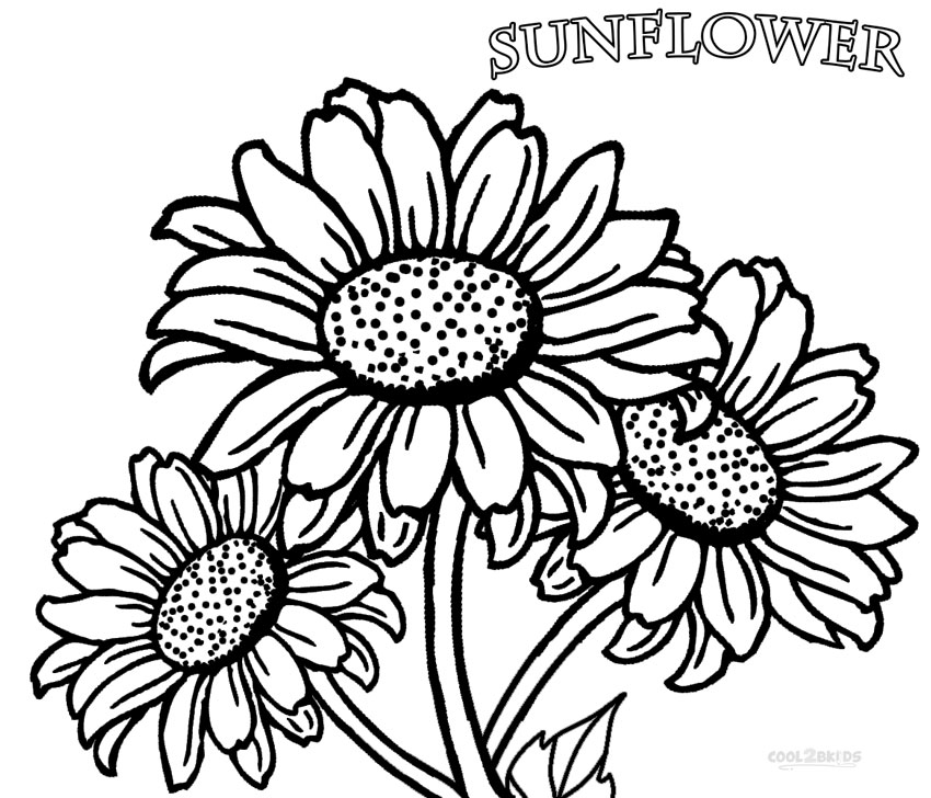 850x728 Printable Sunflower Coloring Pages For Kids Cool2bkids