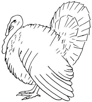365x405 How To Draw A Turkey