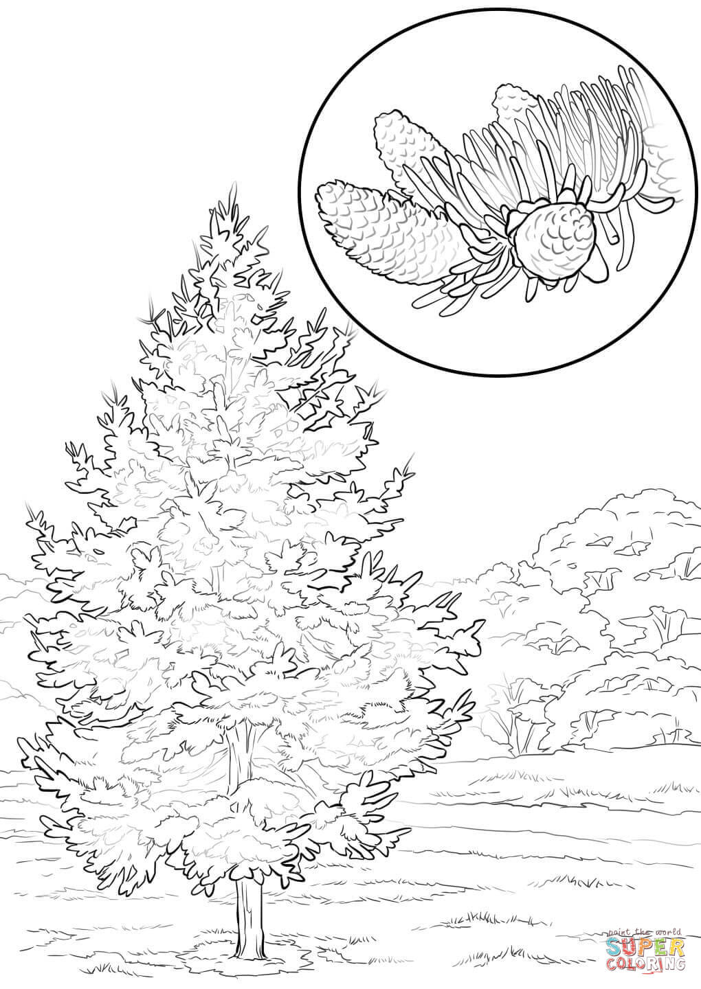 1020x1440 Colorado Blue Spruce Coloring Page Free Printable Coloring Pages