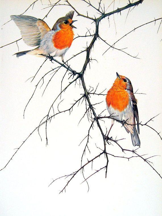 570x757 Robin Bird Drawing How To Draw Bird Bird Robin Water Colors