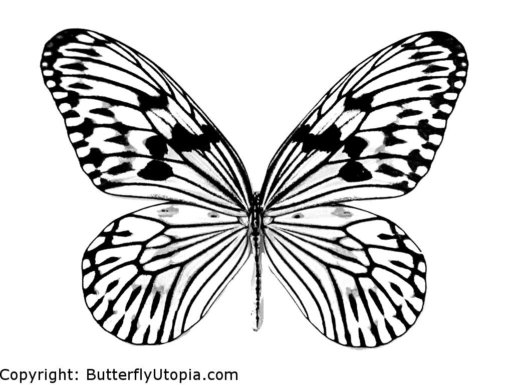Colorful Butterfly Drawing at GetDrawings.com | Free for personal ...